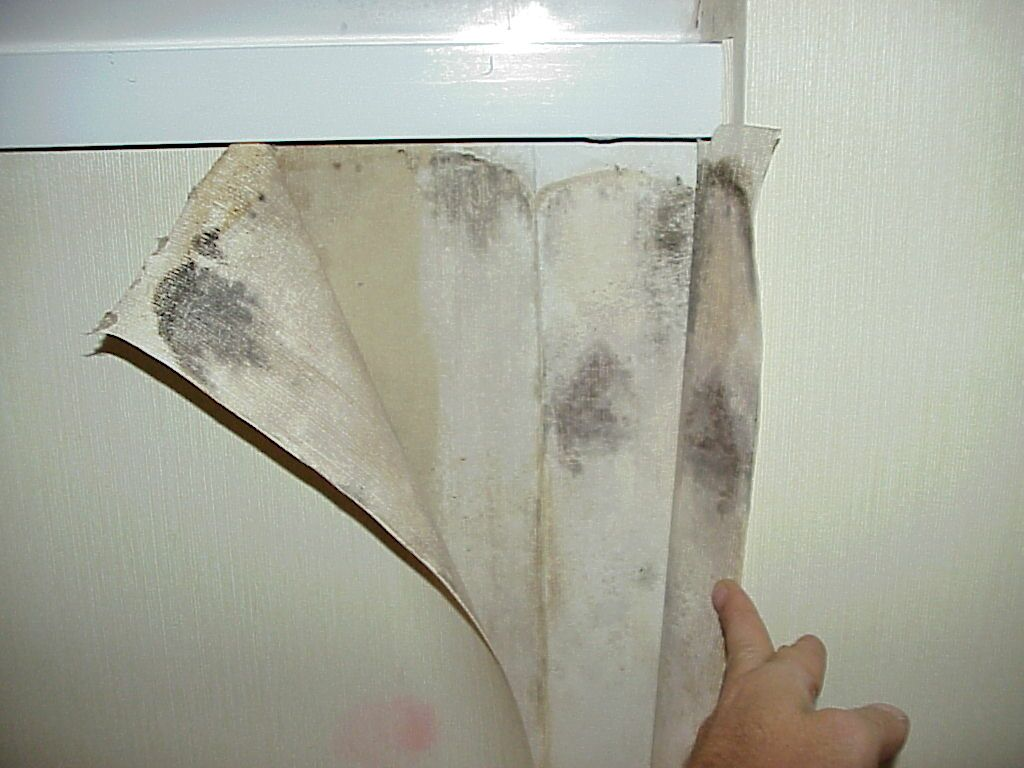 mold growth on vinyl wallpaper showing a pink area on the outside of the vinyl with a mold bloom behind it.